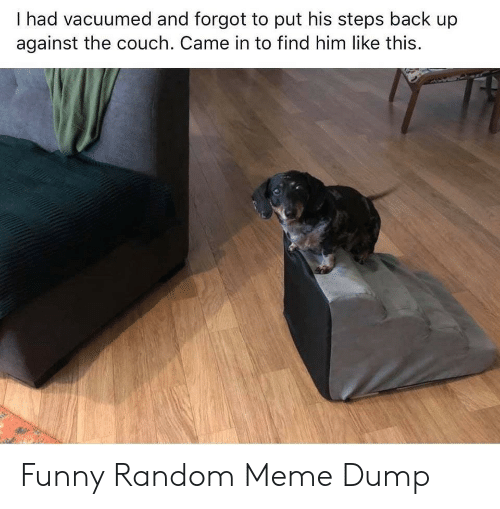 Couch: I had vacuumed and forgot to put his steps back up  against the couch. Came in to find him like this. Funny Random Meme Dump