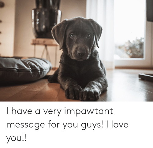 I Love You: I have a very impawtant message for you guys! I love you!!