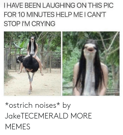 mei: I HAVE BEEN LAUGHING ON THIS PIC  FOR 10 MINUTES HELP MEI CAN'T  STOP I'M CRYING *ostrich noises* by JakeTECEMERALD MORE MEMES