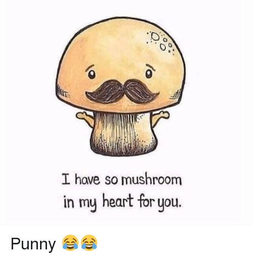 Punnies: I have so mushroom  in my heart for you Punny 😂😂