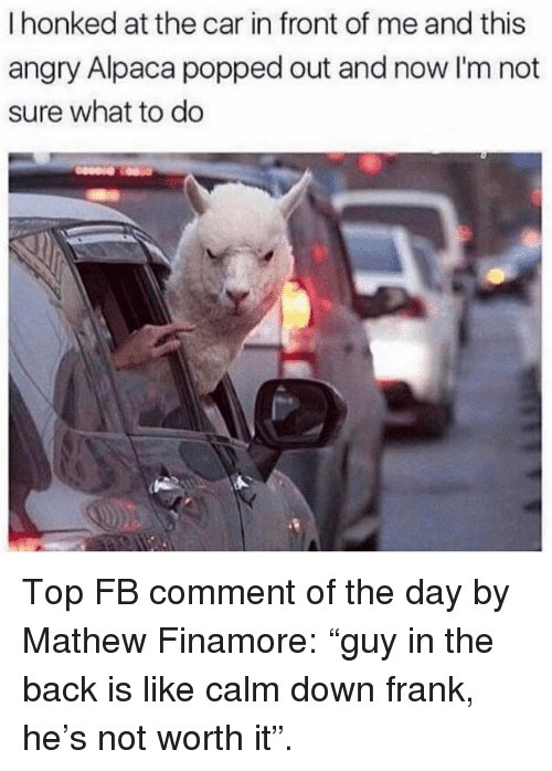 """Not Worth It: I honked at the car in front of me and this  angry Alpaca popped out and now I'm not  sure what to do Top FB comment of the day by Mathew Finamore: """"guy in the back is like calm down frank, he's not worth it""""."""
