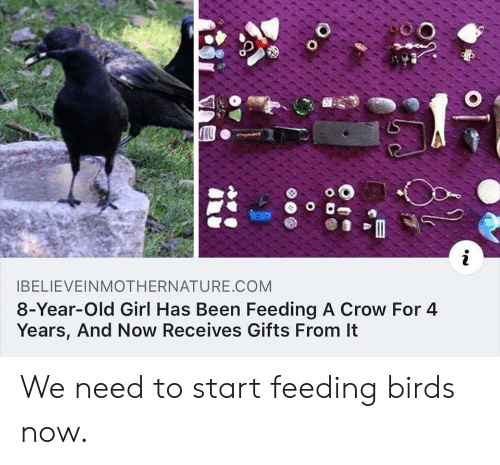 Birds, Girl, and Old: i  IBELIEVEINMOTHERNATURE.COM  8-Year-Old Girl Has Been Feeding A Crow For 4  Years, And Now Receives Gifts From It  O o We need to start feeding birds now.