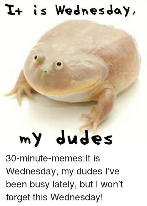 it is wednesday my dudes: I+ is Wednesday  my dudes 30-minute-memes:It is Wednesday, my dudes I've been busy lately, but I won't forget this Wednesday!
