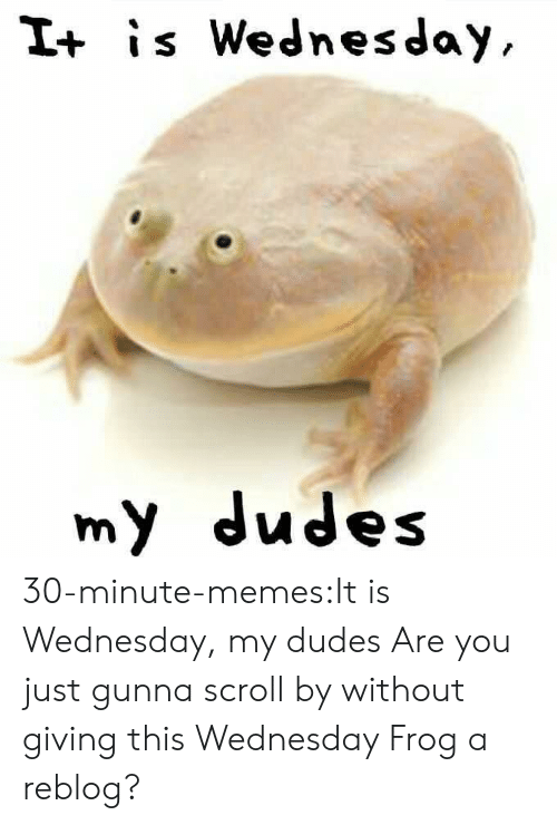 it is wednesday my dudes: I+ is Wednesday  my dudes 30-minute-memes:It is Wednesday, my dudes Are you just gunna scroll by without giving this Wednesday Frog a reblog?