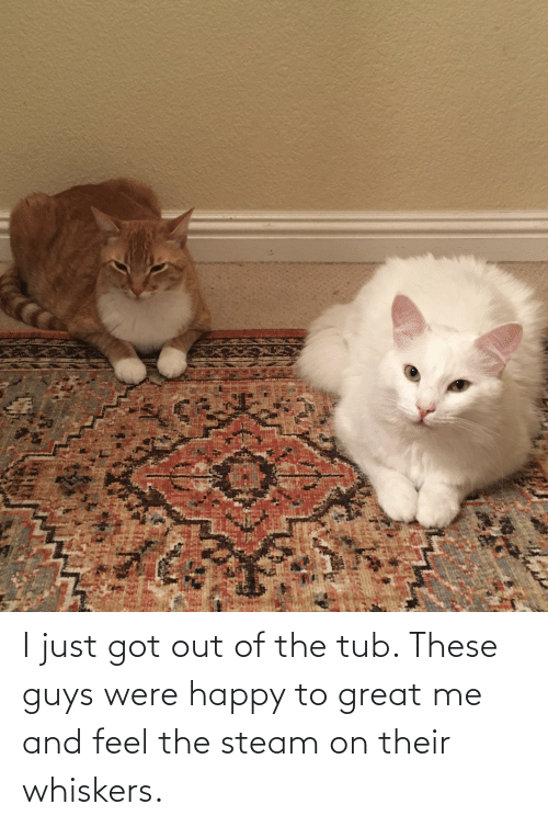 tub: I just got out of the tub. These guys were happy to great me and feel the steam on their whiskers.