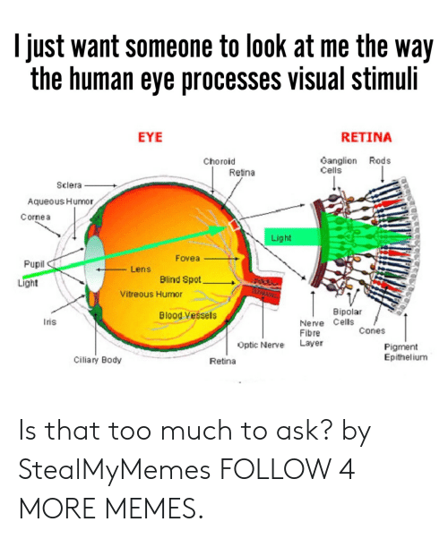 Dank, Memes, and Reddit: I just want someone to look at me the way  the human eye processes visual stimuli  RETINA  EYE  Ganglion Rods  Cells  Choroid  Retina  Sclera  Aqueous Humor  Cornea  Light  Fovea  Pupil  Lens  Blind Spot  Light  Vitreous Humor  Bipolar  Blood Vessels  Nerve Cells  Fibre  Layer  ris  Cones  Optic Nerve  Pigment  Epithelium  Ciliary Body  Retina Is that too much to ask? by StealMyMemes FOLLOW 4 MORE MEMES.