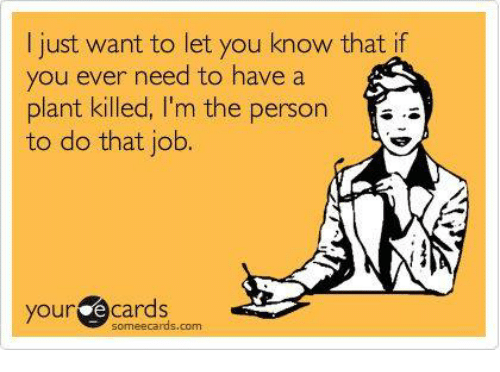 Some Ecard: I just want to let you know that if  you ever need to have a  plant killed, I'm the person  to do that job.  your e some ecards com  Cards