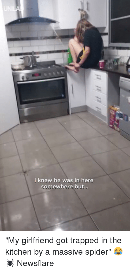 """Dank, Spider, and Girlfriend: I knew he was in here  somewhere but.., """"My girlfriend got trapped in the kitchen by a massive spider"""" 😂🕷️  Newsflare"""