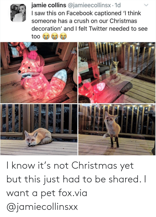 Just Had: I know it's not Christmas yet but this just had to be shared. I want a pet fox.via @jamiecollinsxx
