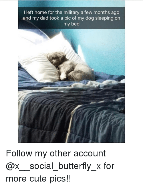 Cute, Dad, and Memes: I left home for the military a few months ago  and my dad took a pic of my dog sleeping on  my bed Follow my other account @x__social_butterfly_x for more cute pics!!