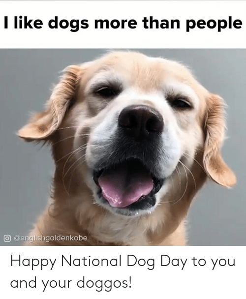 Dogs, Memes, and Happy: I like dogs more than people  @englishgoldenkobe Happy National Dog Day to you and your doggos!