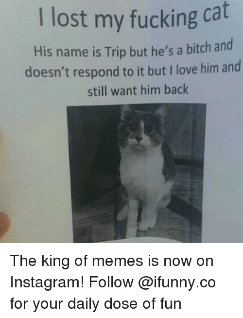 Your Daily Dose: I lost my fucking cat  His name is Trip but he's a bitch and  doesn't respond to it but I love him and  still want him back The king of memes is now on Instagram! Follow @ifunny.co for your daily dose of fun