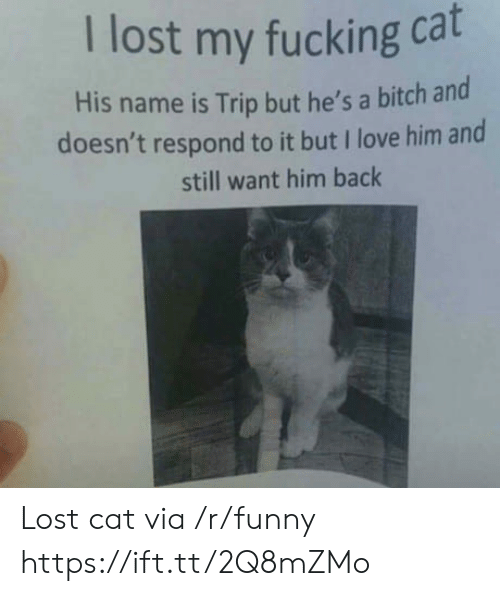 Lost Cat: I lost my fucking cat  His name is Trip but he's a bitch ard  doesn't respond to it but I love him and  still want him back Lost cat via /r/funny https://ift.tt/2Q8mZMo