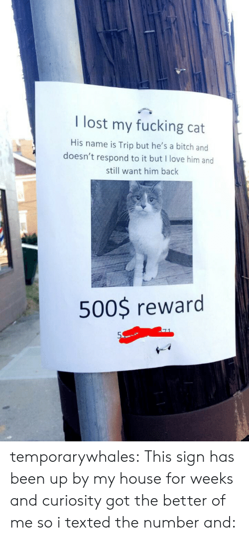 Bitch, Fucking, and Love: I lost my fucking cat  His name is Trip but he's a bitch and  doesn't respond to it but I love him and  still want him bachk  500$ reward temporarywhales: This sign has been up by my house for weeks and curiosity got the better of me so i texted the number and: