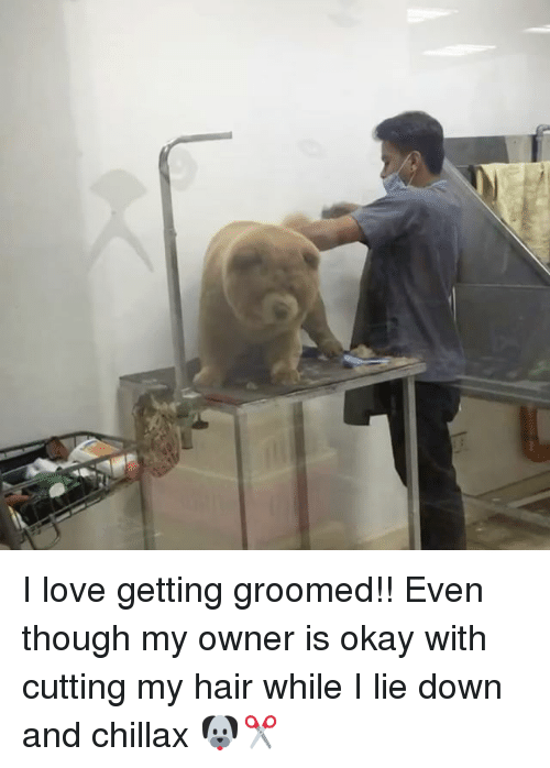 Groomed: I love getting groomed!! Even though my owner is okay with cutting my hair while I lie down and chillax 🐶✂️