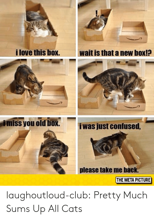 Cats, Club, and Confused: i love this box.  wait is that a new box!?  miss you old box.  iwas just confused,  please take me back.  THE META PICTURE laughoutloud-club:  Pretty Much Sums Up All Cats