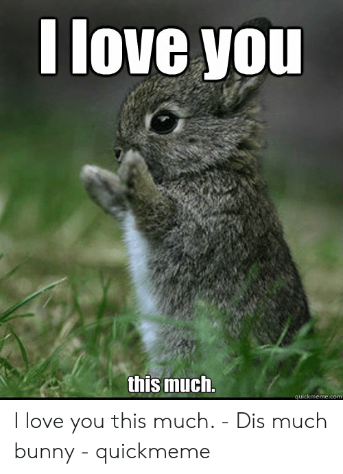 Love, I Love You, and Com: I love you  this much.  quickmeme.com I love you this much. - Dis much bunny - quickmeme