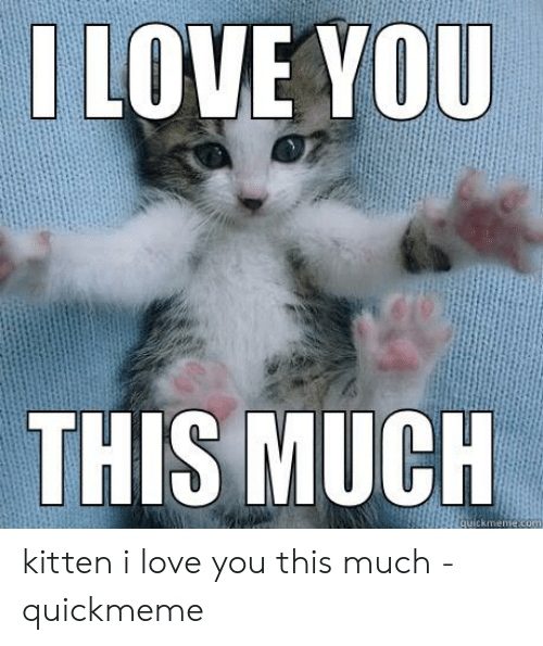 Love, I Love You, and Com: I LOVE YOU  THIS MUCH  quickmeme.com kitten i love you this much - quickmeme