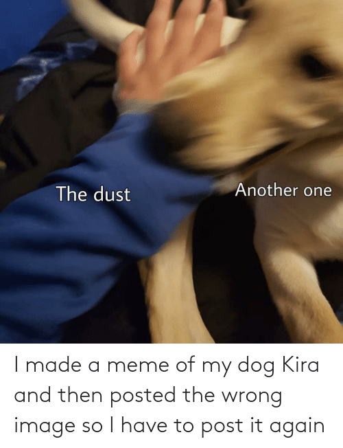 and then: I made a meme of my dog Kira and then posted the wrong image so I have to post it again