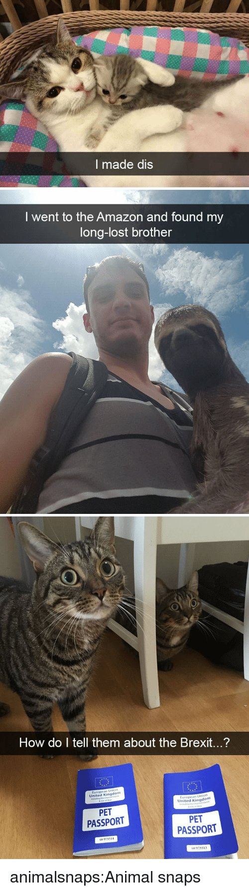 Amazon, Target, and Tumblr: I made dis   I went to the Amazon and found my  long-lost brother   How do I tell them about the Brexit...?  Union  United Kingdon  European  ion  European Un  United Kingdom  PET  PASSPORT  PET  PASSPORT  G8 975514  G 975513 animalsnaps:Animal snaps