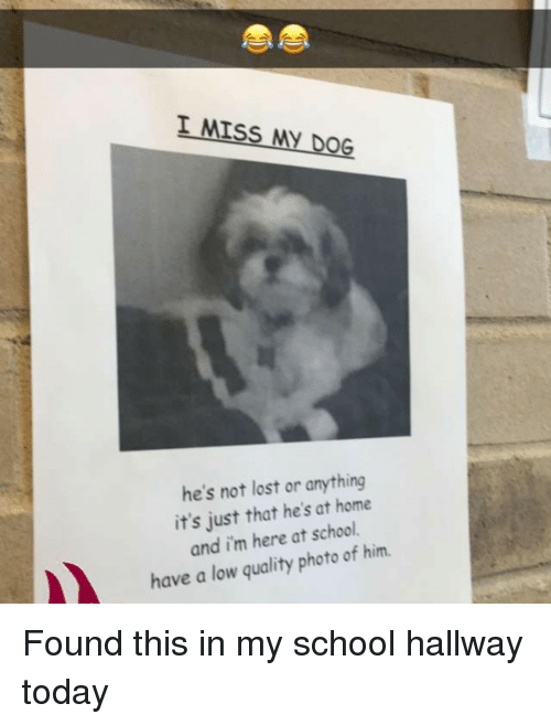 Miss My Dog: I MISS MY DOG  he's not lost or anything  it's just that he's at home  and im here at school  have a low quality photo of him Found this in my school hallway today