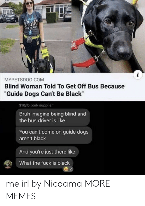 """Bruh, Dank, and Dogs: i  MYPETSDOG.COM  Blind Woman Told To Get Off Bus Because  """"Guide Dogs Can't Be Black""""  $10/lb pork supplier  Bruh imagine being blind and  the bus driver is like  You can't come on guide dogs  aren't black  And you're just there like  What the fuck is black  2 me irl by Nicoama MORE MEMES"""