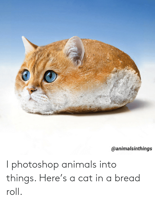 photoshop: I photoshop animals into things. Here's a cat in a bread roll.