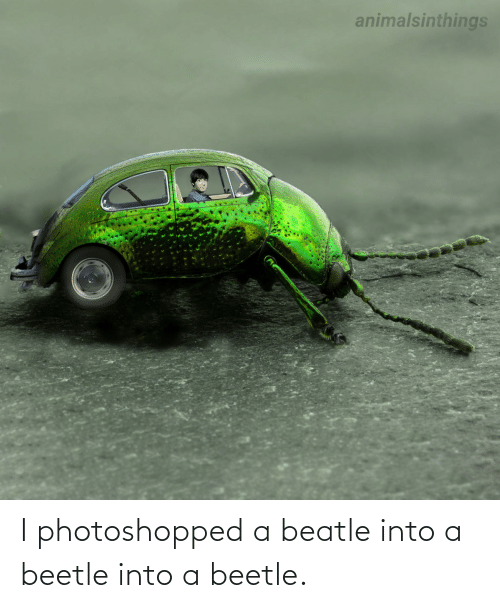 photoshopped: I photoshopped a beatle into a beetle into a beetle.