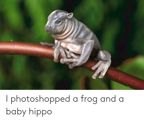 photoshopped: I photoshopped a frog and a baby hippo