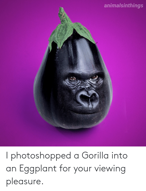 gorilla: I photoshopped a Gorilla into an Eggplant for your viewing pleasure.