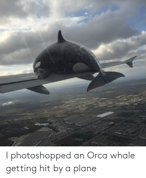 photoshopped: I photoshopped an Orca whale getting hit by a plane