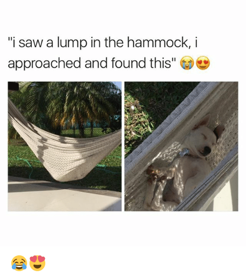 "Memes, Saw, and Hammock: ""i saw a lump in the hammock,i  approached and found this"" 😂😍"