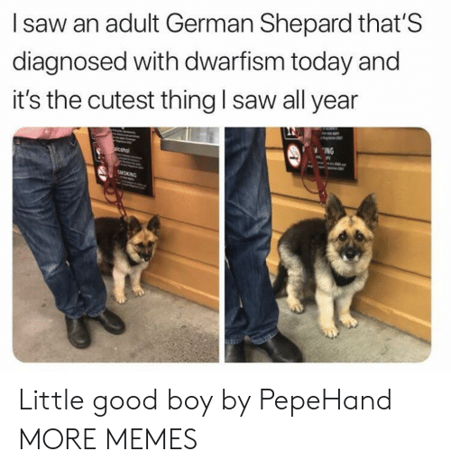 Dank, Memes, and Saw: I saw an adult German Shepard that'S  diagnosed with dwarfism today and  it's the cutest thing l saw all year  ING Little good boy by PepeHand MORE MEMES