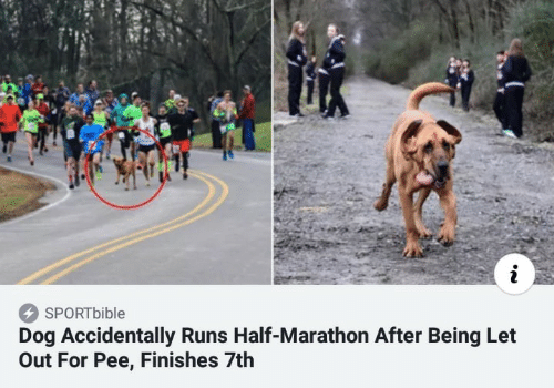 Dog, Marathon, and For: i  SPORTbible  Dog Accidentally Runs Half-Marathon After Being Let  Out For Pee, Finishes 7th