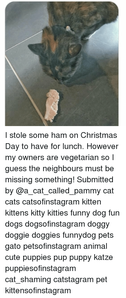 Cats, Christmas, and Cute: I stole some ham on Christmas Day to have for lunch. However my owners are vegetarian so I guess the neighbours must be missing something! Submitted by @a_cat_called_pammy cat cats catsofinstagram kitten kittens kitty kitties funny dog fun dogs dogsofinstagram doggy doggie doggies funnydog pets gato petsofinstagram animal cute puppies pup puppy katze puppiesofinstagram cat_shaming catstagram pet kittensofinstagram