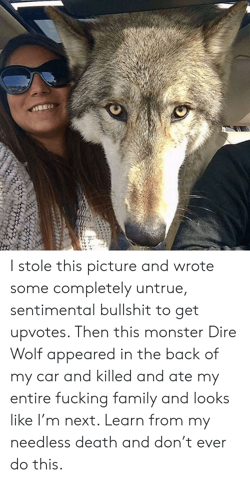 dire wolf: I stole this picture and wrote some completely untrue, sentimental bullshit to get upvotes. Then this monster Dire Wolf appeared in the back of my car and killed and ate my entire fucking family and looks like I'm next. Learn from my needless death and don't ever do this.