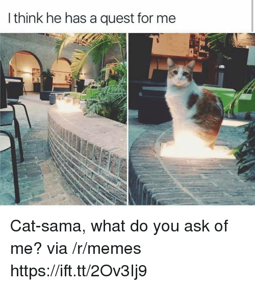 sama: I think he has a quest for me Cat-sama, what do you ask of me? via /r/memes https://ift.tt/2Ov3Ij9