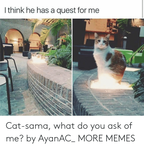 sama: I think he has a quest for me Cat-sama, what do you ask of me? by AyanAC_ MORE MEMES