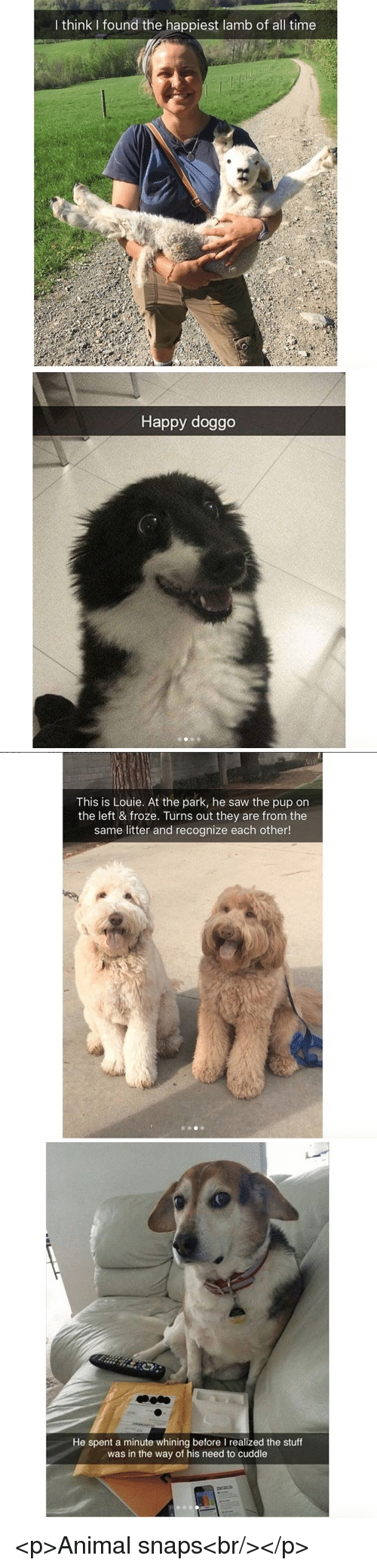 Saw, Animal, and Happy: I think I found the happiest lamb of all time   Happy doggo   This is Louie. At the park, he saw the pup on  the left & froze. Turns out they are from the  same litter and recognize each other!   h@  He spent a minute whining before I realized the stuff  was in the way of his need to cuddle <p>Animal snaps<br/></p>