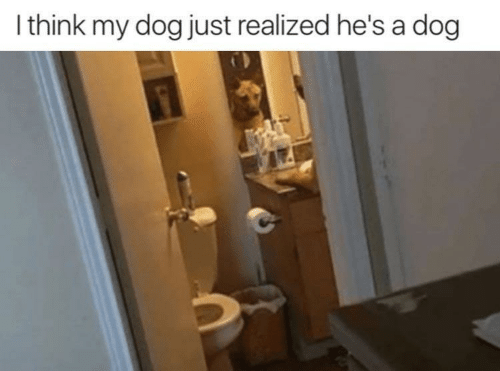 Just Realized: I think my dog just realized he's a dog