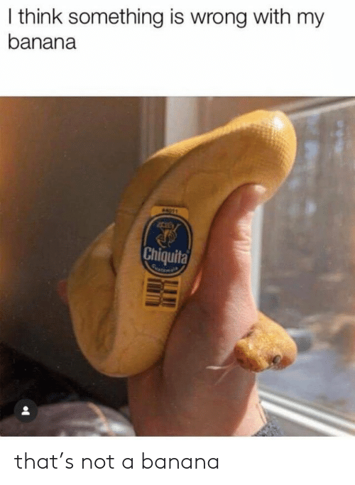 Banana, Think, and Chiquita: I think something is wrong with my  banana  A11  Chiquita that's not a banana