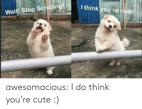 Scrolling: I think you're cute  Wait! Stop Scrolling! awesomacious:  I do think you're cute :)