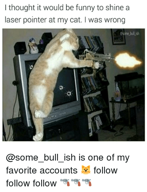 follow-follow-follow: I thought it would be funny to shine a  laser pointer at my cat. I was wrong  Csome bulLish @some_bull_ish is one of my favorite accounts 🐱 follow follow follow 🔫🔫🔫