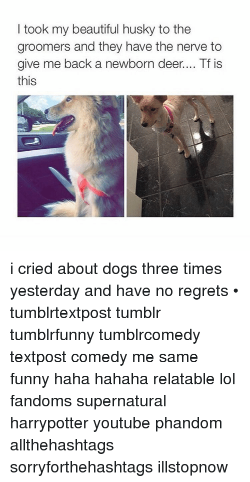 no regret: I took my beautiful husky to the  groomers and they have the nerve to  give me back a newborn deer.... Tf is  this i cried about dogs three times yesterday and have no regrets • tumblrtextpost tumblr tumblrfunny tumblrcomedy textpost comedy me same funny haha hahaha relatable lol fandoms supernatural harrypotter youtube phandom allthehashtags sorryforthehashtags illstopnow