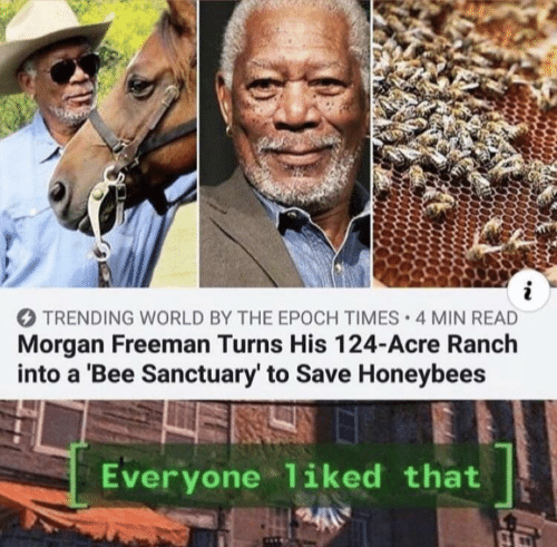 freeman: i  TRENDING WORLD BY THE EPOCH TIMES 4 MIN READ  Morgan Freeman Turns His 124-Acre Ranch  into a 'Bee Sanctuary' to Save Honeybees  Everyone liked that