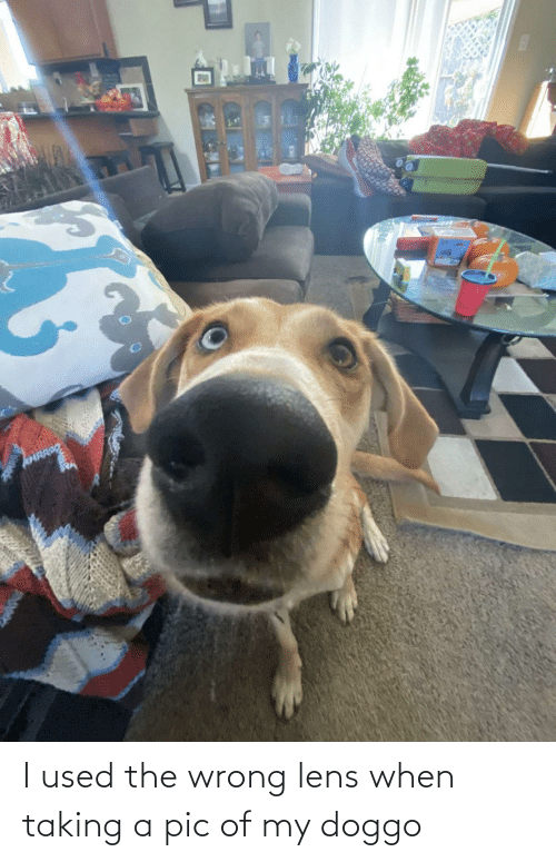 doggo: I used the wrong lens when taking a pic of my doggo