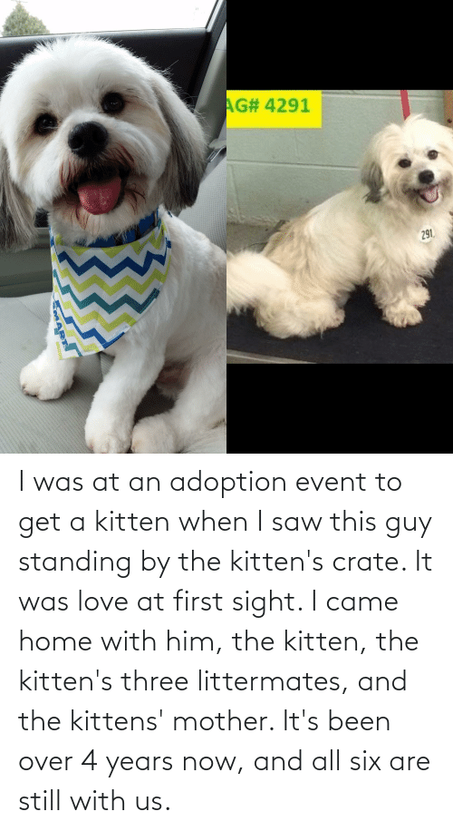 Been: I was at an adoption event to get a kitten when I saw this guy standing by the kitten's crate. It was love at first sight. I came home with him, the kitten, the kitten's three littermates, and the kittens' mother. It's been over 4 years now, and all six are still with us.