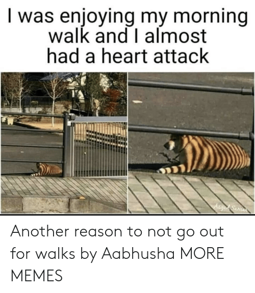 I Almost Had A Heart Attack: I was enjoying my morning  walk and I almost  had a heart attack Another reason to not go out for walks by Aabhusha MORE MEMES