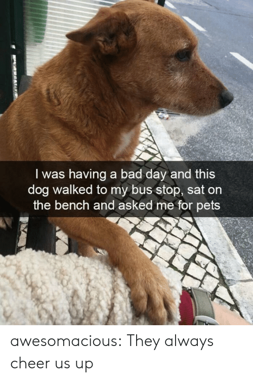 Bad, Bad Day, and Tumblr: I was having a bad day and this  dog walked to my bus stop, sat on  the bench and asked me for pets awesomacious:  They always cheer us up