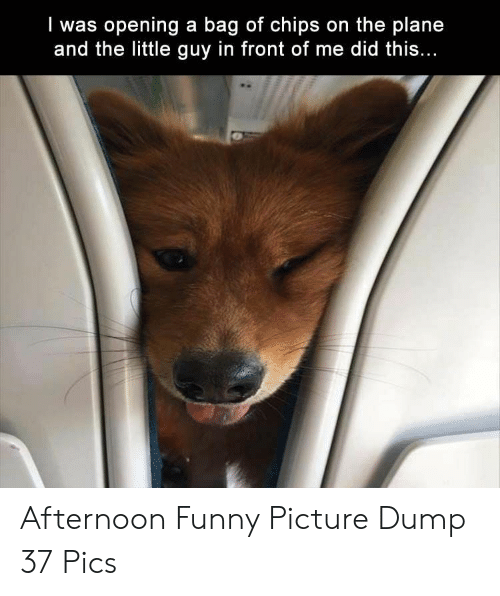 funny picture: I was opening a bag of chips on the plane  and the little guy in front of me did this Afternoon Funny Picture Dump 37 Pics